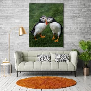 Puffins whispering, Faroe - File Download for Prints puffins whispering mockup1