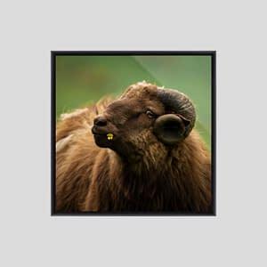 Buy sheep flower faroe frame 1